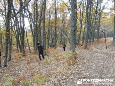 El Castañar de El Tiemblo, clubs de senderismo en madrid; senderismo valle del jerte